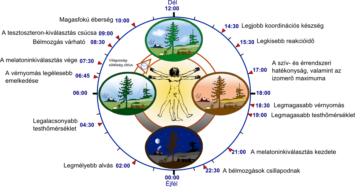 Biológiai óra